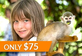 punta cana monkey land