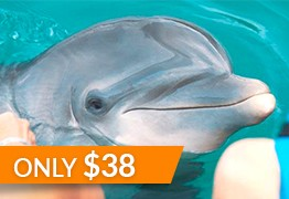 family activities montego bay dolphin cove
