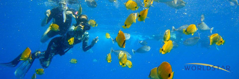 Quicksilver Snorkeling Tour Maui   Things to Do in Hawaii